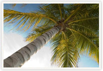Aruba Vacation Timeshare > Aruba Plam Tree